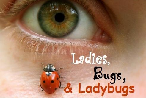 Ladies, Bugs & Ladybugs