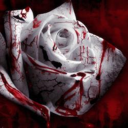 Foto bij 1: Rozen Bloed