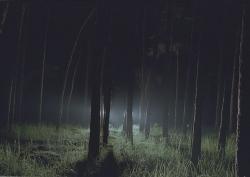 Foto bij | Forbidden Forest |